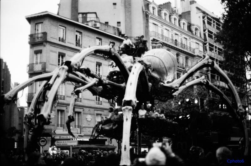 araignée minotaure photo la machine cphoto6